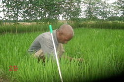 Community Based Rehabilitation picture of a blind man working in field